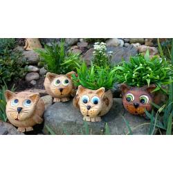 Střední kočky