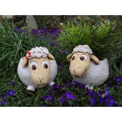 Velká ovce